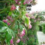 PROJEKTI: Otvoren terapijski vrt u prirodnom rezervatu Zasavica