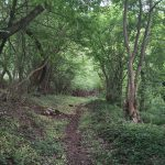 Coaching with nature ili kada je Priroda tvoja Učiteljica života